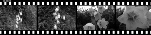 Mhotarubukuro160603.jpg