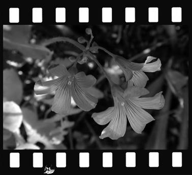Mkatabami160610-2.jpg