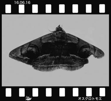 Mosugurotomoe160616.jpg