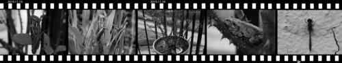 Mtuchiinago1115-1.jpg