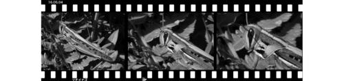 Mtuchiinago160504-1.jpg