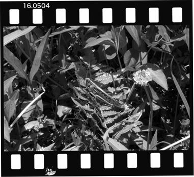 Mtuchiinago160504.jpg