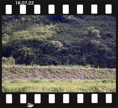 kogoseyuri160722-1.jpg