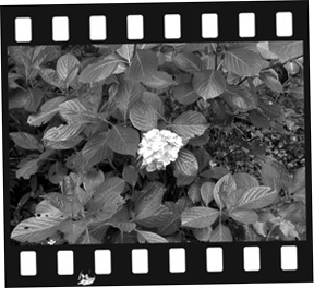 phot00201106 226.jpg