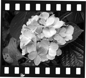 phot00201106 227.jpg