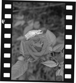 phot 164.jpg